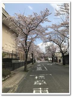 公園正面道路.jpg
